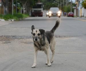 Criação da Delegacia Eletrônica de Proteção Animal é aprovada na Câmara