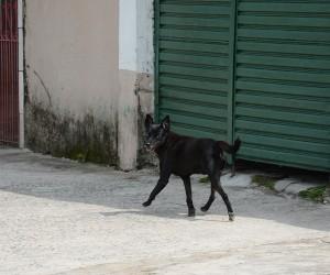 Vereador propõe regras para casinha de cães comunitários