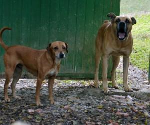 Projeto na Câmara cria auxílio animal em São José dos Campos
