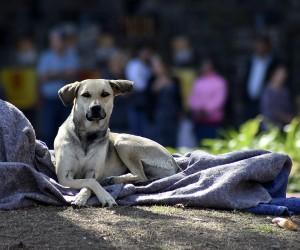 Projeto autoriza entrada de animais de estimação dos moradores de rua em abrigos