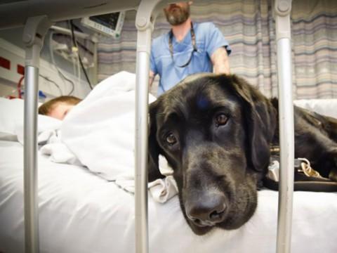 Projeto libera visita de animais de estimação em hospitais públicos e particulares