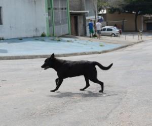 Projeto dispõe sobre cuidados com animais de rua comunitários