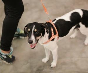 Vereador propõe Escola Amiga dos Animais para educar sobre cuidados com pets