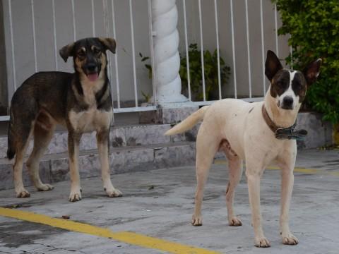 Vereador propõe criação de farmácia veterinária popular