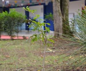 Leis aprovadas em São José reforçam a proteção ao meio ambiente