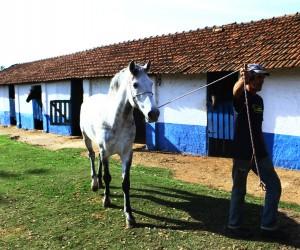 Projeto propõe tratamento com cavalo para reabilitação de pessoas com deficiência
