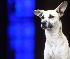 Câmara vota projeto que cria convênio entre Prefeitura e clínicas veterinárias