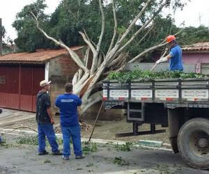 Projeto propõe isentar morador de baixa renda de custos sobre queda de árvore
