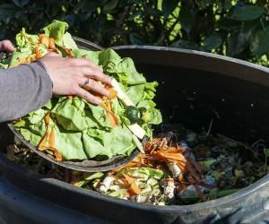 Projeto dispõe sobre reciclagem de resíduos orgânicos por grandes geradores