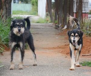 Projeto autoriza Guarda Municipal a atuar em casos de maus-tratos a animais