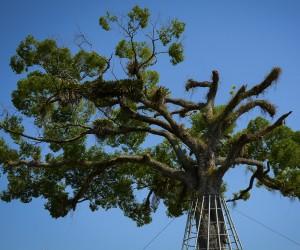 No dia da árvore conheça leis que tratam de arborização na cidade