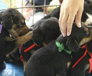 Vereador propõe regras para feiras de adoção de animais em áreas públicas