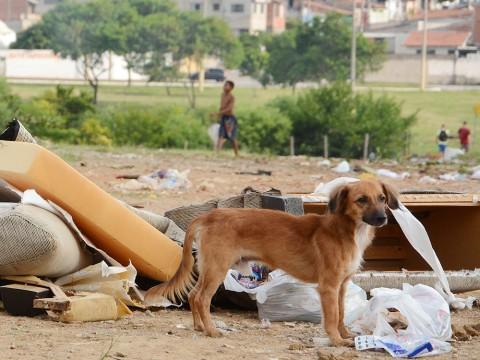 Projeto propõe atendimento itinerante a animais na periferia de São José