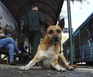 Vereador propõe campanha de conscientização para vacinação de cães