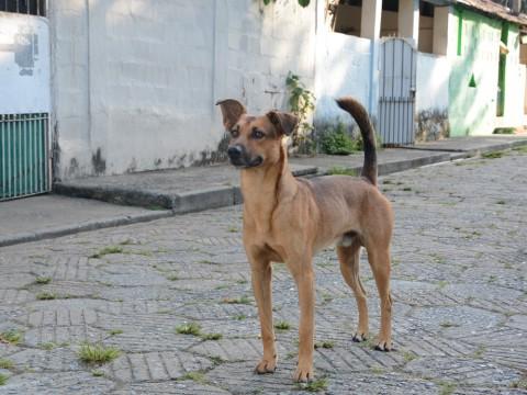 Vereador propõe criação de cadastro de protetores de animais em São José