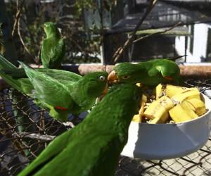 Vereador pretende instituir programa de soltura de animais silvestres na cidade