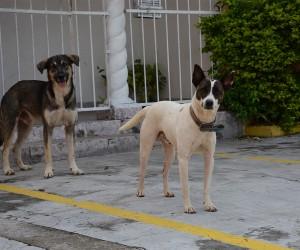 Projeto proíbe acorrentamento e confinamento permanente de animais domésticos
