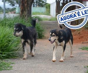 IPTU de São José terá espaço para contribuições voluntárias para a causa animal