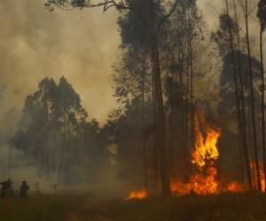 Lei cria programa para proteger áreas verdes contra incêndios